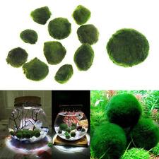 3-4CM Marimo Moss Ball Algae Live Plant Aquarium Fish Tank Ornament Decoration