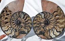 "RARE 1 in 100 BLACK Ammonite Pair Deep Crystals XXXLRG 8.9"" 110myo 225mm 9194x"