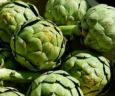☺15 graines d artichaut vert globe