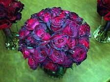 20+ BLACK BACCARA (purple tea) Rose Bush Seeds - Rare, USA SELLER, ships free