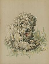 More details for sealyham terrier lovely old vintage 1930's dog art print by kf barker