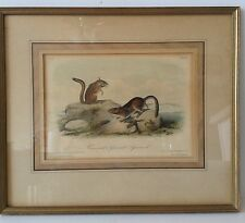 Aubudon Townsends Ground Squirrel R Trembly Framed Lithograph Hand Colored