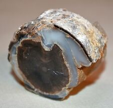 Petrified Agatized Wood Limb Casting Cut & Polished From Wyoming, United States