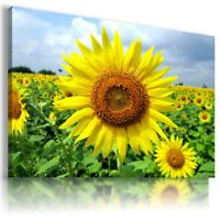 SUNFLOWERS YELLOW SUMMER FLOWER FIELD Canvas Wall Art Picture  FL4 MATAGA