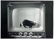 2 Photos - TV Screen - Jumpin Dwarf - trick - Tirages argentiques d'époque 1960