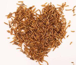 Getrocknete Mehlwürmer Snack für Vögel, Fische, Reptilien, Schildkröte, Igel,