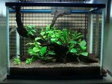 2 stalks x Anubias barteri nana eyes-live aquarium plant fish tank co2 moss java