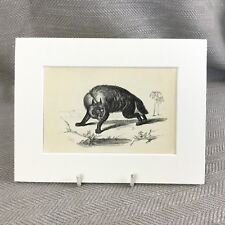 1853 Striped Hyena Wild Animals Victorian Antique Original Print