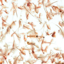 50ml Live Baby Brine Shrimp - Freshly Hatched Daily From USA Salt Lake Eggs