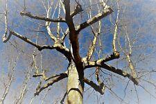 """"""" natural web """"  photo d'artiste tirage papier - arbre nature"""