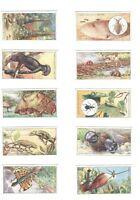 1924 Wonders of Nature, Lambert & Butler Complete Tobacco Card Set of 24 cards