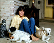 David Cassidy UNSIGNED photo - K9078 - With his dogs!!!!