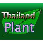 ThailandPlant