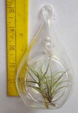 5.5 inch glass terrarium with 2 tillandsia airplants. air plant orb ornament