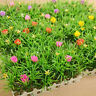 Red Flower Plastic Artificial Lawn Turf Plant  Grass Lawn Garden Balcony Decor