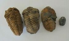 More details for 4 x trilobite fossil  .. free uk postage