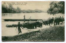 CPA - Carte Postale - Congo Belge - District de Uele - Les Éléphants