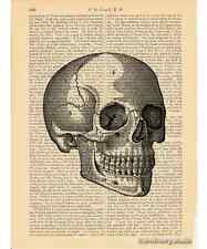 Skull 1 Art Print on Antique Book Page Vintage Illustration Medical Anatomy