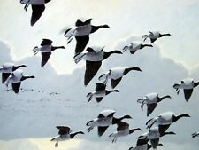 More details for peter scott - when the tide turned brent geese signed lady philipa scott - print