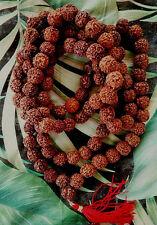 "HUGE 60"" RUDRAKSHA RUDRAKSH JAPA MALA ROSARY 108+1 13MM MEDITATION PRAYER BEADS"