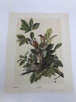John James Audubon Folio Plate 50 Robin Limited 750