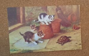 Vintage Cat Postcard. 3 kittens and a tortoise. British. Not mailed.