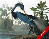 GIANT PRINT POSTER PAINTING NATURE BIRD AUDUBON AMERICAN FLAMINGO PDC099