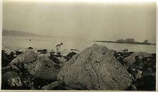 PHOTO ANCIENNE - VINTAGE SNAPSHOT - MER ROCHER PÊCHE À PIED - SEA FISHING ROCK