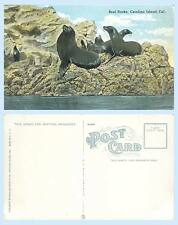 Seal Rocks Santa Catalina Island California c1912 Postcard