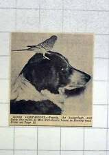 1951 Poppy The Budgie, Susie The Collie Mrs Nicholson Hornby Road Blackpool