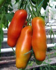 Tomato Seeds *Eros* Heirloom Vegetable Seeds / average