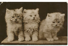 PC18220 Old Postcard. Kittens. 1915