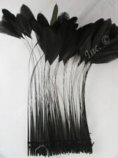 Black Stripped Coque Millinery Feathers 6 inch Pack of 25