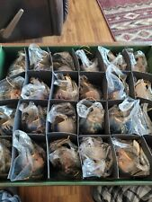 Bradford Editions Free as the Wind Horse Collectibles Lot (23)