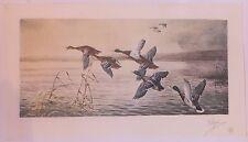 B Rial Gravure en couleurs Canards Ducks Chasse Hunt