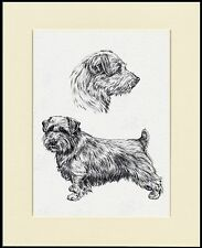 NORFOLK TERRIER LOVELY DOG PRINT MOUNTED READY TO FRAME #1
