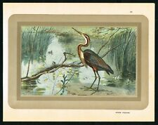 1933 Purple Heron, Aquatic Bird Ardea purpurea, Antique Print - Manufrance