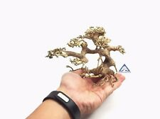 Aquarium Bonsai Driftwood Moss Small Tree  Shrimp Nano Planted Tank - Bulk A