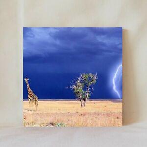 "Decorative Tile 4"" x 4"" African Savanna Thunderstorm Giraffe Wildlife Africa"