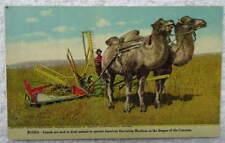 ADVERTISING POSTCARD INTERNATIONAL HARVESTOR CO EQUIPMENT RUSSIA CAMELS #6