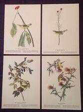 1942 Vintage AUDUBON LOT #1 of 4 YELLOW BIRDS INSTANT DECOR Art Lithographs