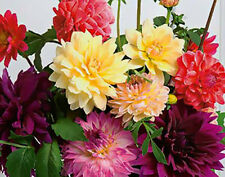 5 DAHLIA UNWIN MIX SPRING GARDENING COLOURFUL BORDER PERENNIALS PLANT ROOTS