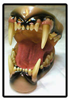 * TAXIDERMY/MODELLING * MOHR * (MEDIUM) AFRICAN LION * JAW & TONGUE SET *
