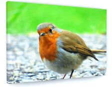 STUNNING RED ROBIN BIRD WILDLIFE CANVAS PICTURE PRINT CHUNKY FRAME LARGE #A168