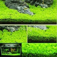Fish Tank Aquarium Decor Green Water Grass Plant Seeds Lawn Home Ornament US