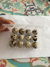 12 Jumbo brown coturnix quail hatching eggs