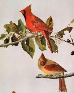 John James Audubon Birds CARDINAL Original Vintage Art Book Plate Print