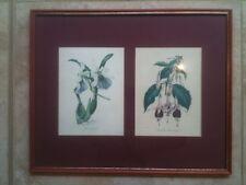 PAIR VINTAGE HAND (?) COLOURED LITHOGRAPHS ORCHIDS FUSCHIA EXOTIC PLANTS FLOWERS