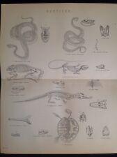 Reptiles Alligator Iguana Chameleon Python Boa Crocs ANTIQUE PRINT c1880s