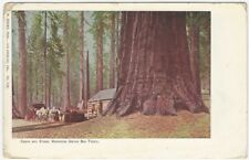 Cabin and Stage Mariposa Grove Big Trees California Postcard